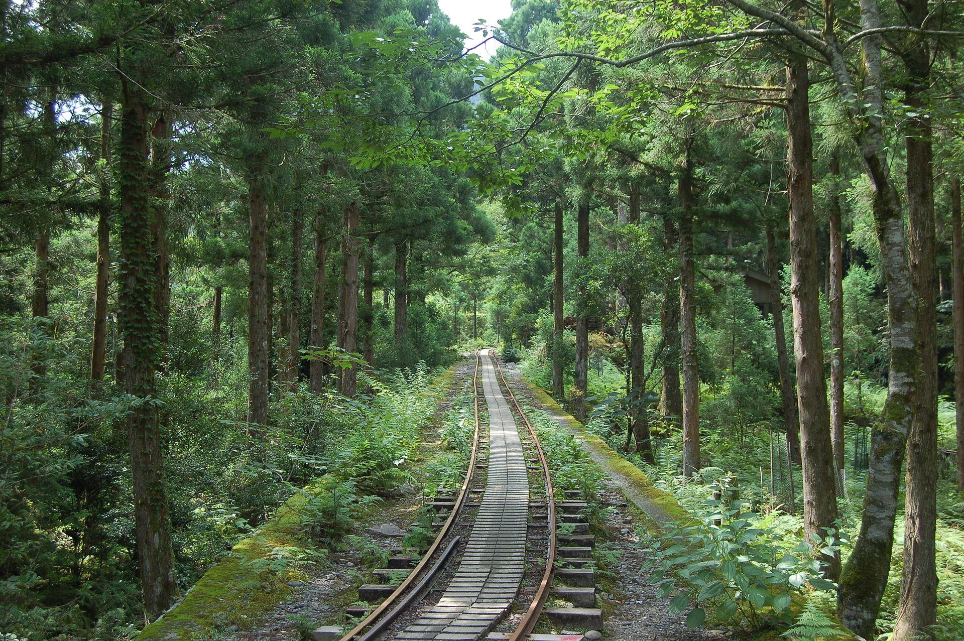 鹿児島の世界自然遺産!鹿児島の美しすぎる絶景リスト